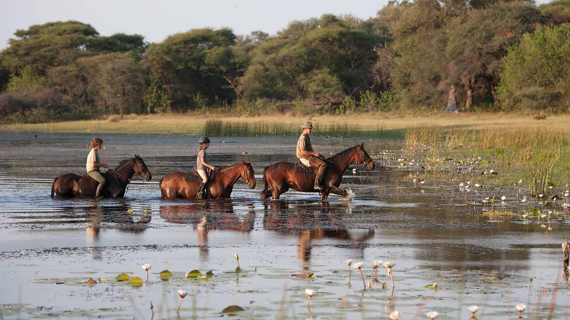 Im Schritt, Trab und Galopp durch das Okavango Delta