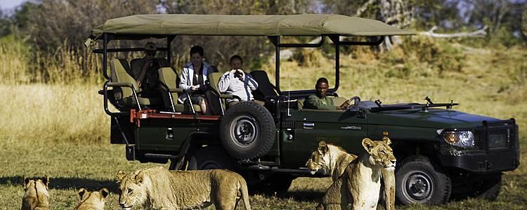 Familien-Safari mit Spannung, Spaß und Action!