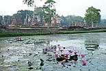 Moustiques Thailandais