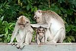 Protection de la faune