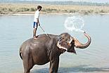 Elephants de Thailande