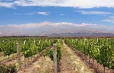 Du pacifique au coeur des Andes, sur la route des vins