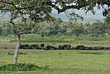 Littérature en Tanzanie
