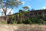 Saadani: Parc National