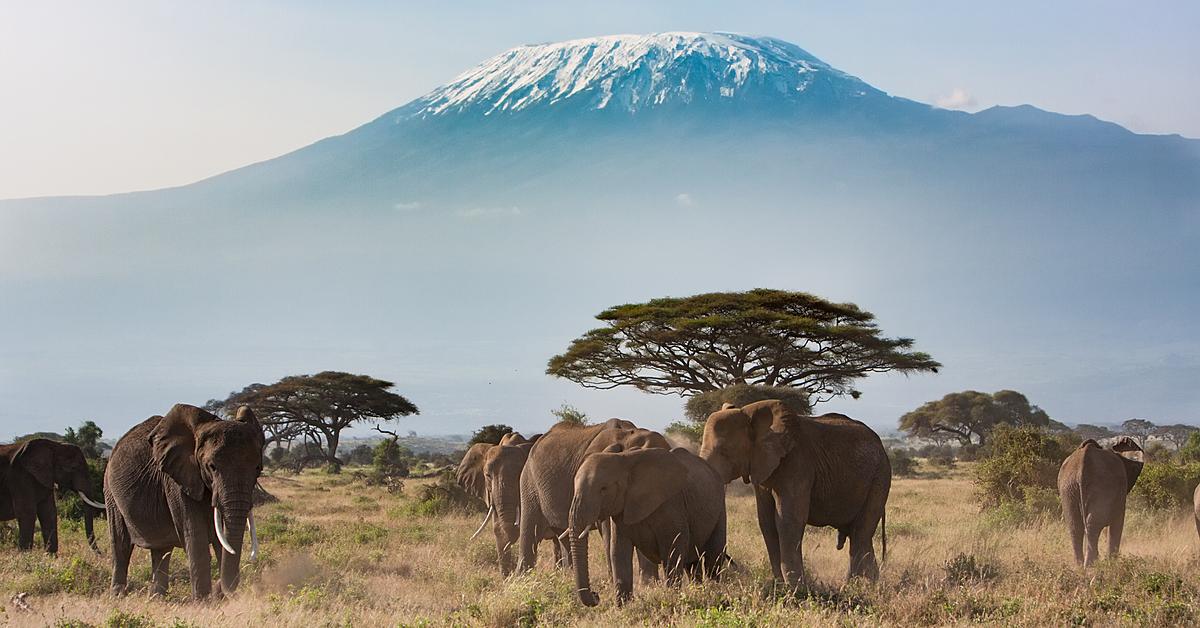 Voyage avec des animaux Tanzanie : Duo Safari - Kilimandjaro-en petit groupe