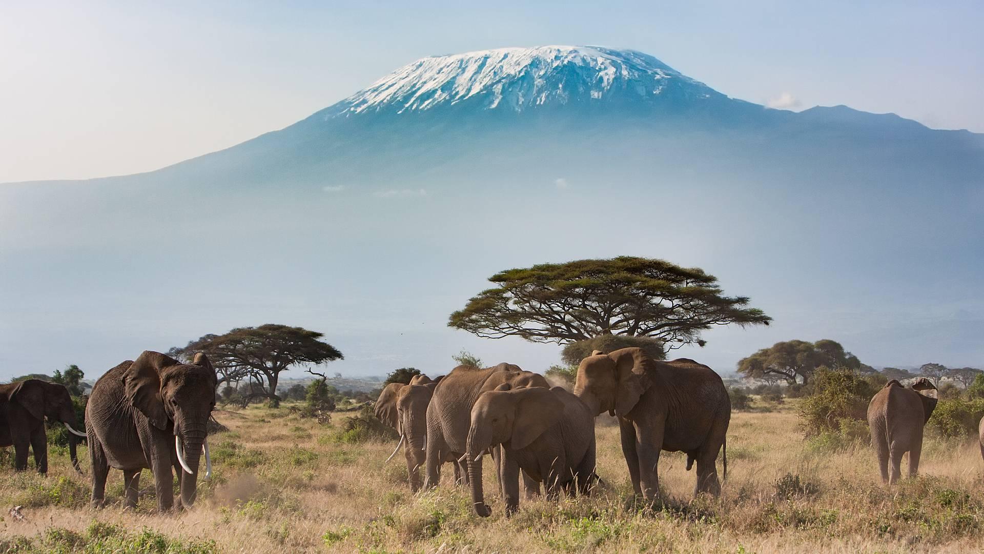 Duo Kilimandjaro - Safari en petit groupe