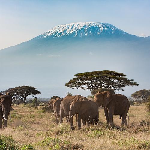 Duo Kilimandjaro - Safari en petit groupe - Arusha -