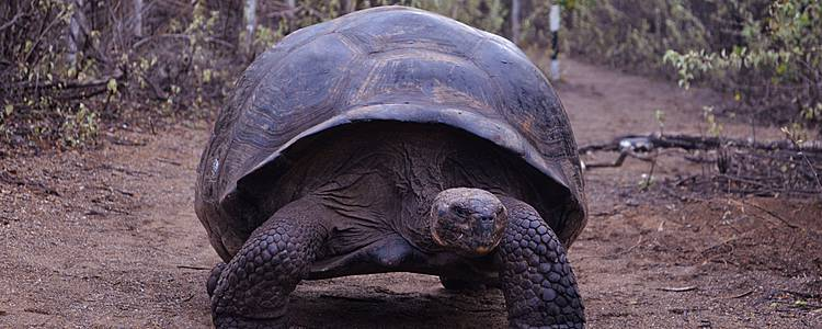 Dagli altipiani andini alle isole delle tartarughe giganti