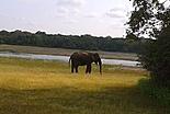 Top des safaris et parcs