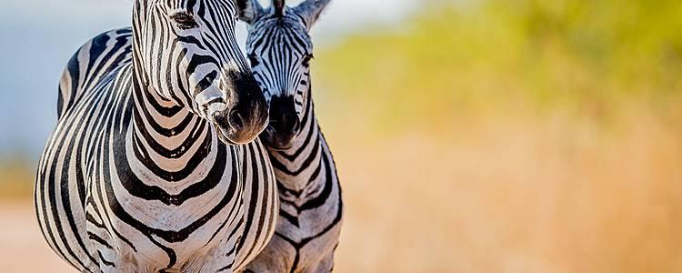 Duo Cape Town et safari
