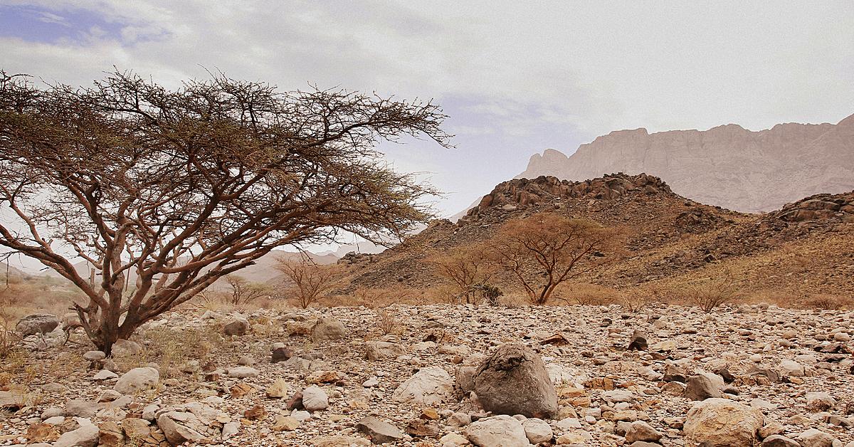 Voyage à pied : Le trek des djebels Alakhdar et Shams