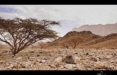Le trek des djebels Alakhdar et Shams
