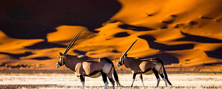 Spielarten der Natur zwischen Windhoek und Sossusvlei