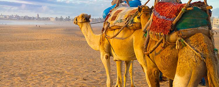 Ruta Marrakech, Desierto y Fez en grupo pequeño
