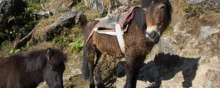 Everest panorama a cavallo, il trekking con i bambini