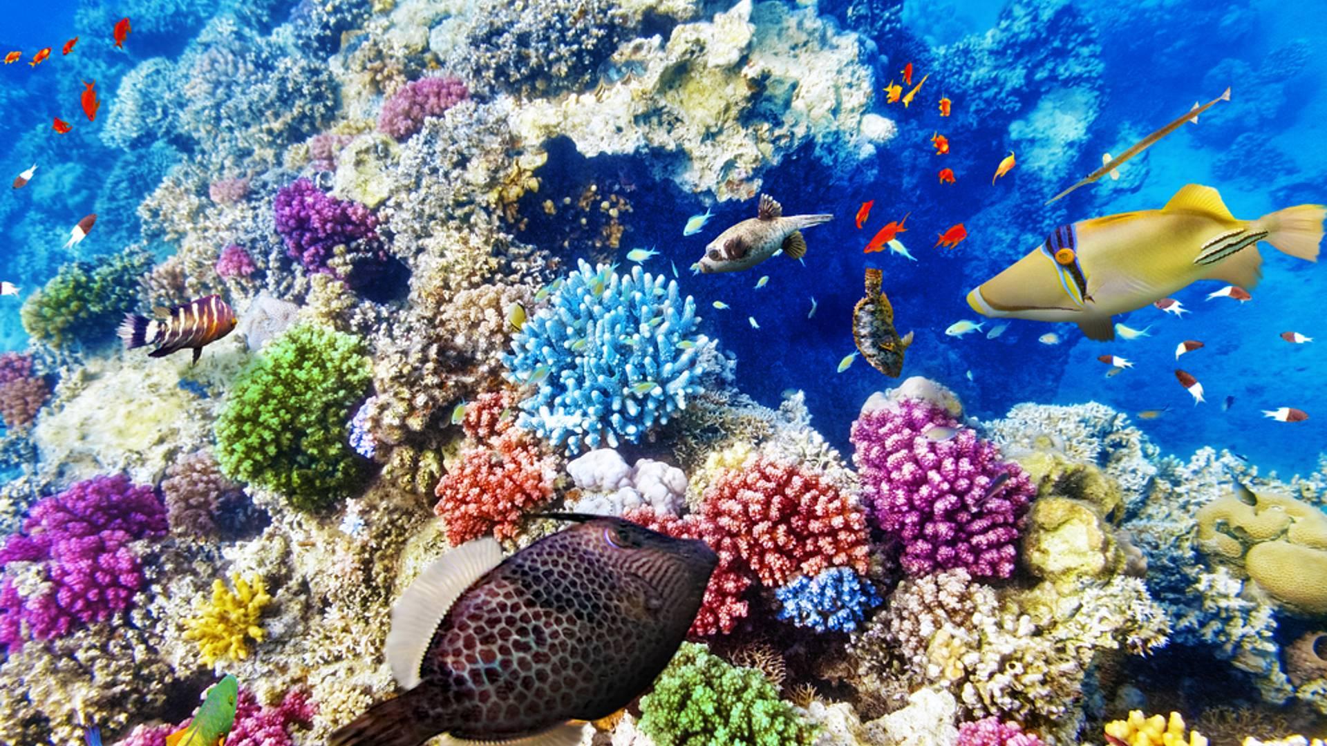 Sunshine Coast und Great Barrier Reef