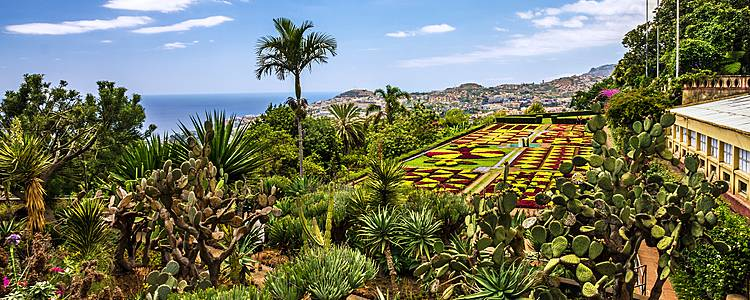 Madeira, i più bei giardini dell'Eterna primavera