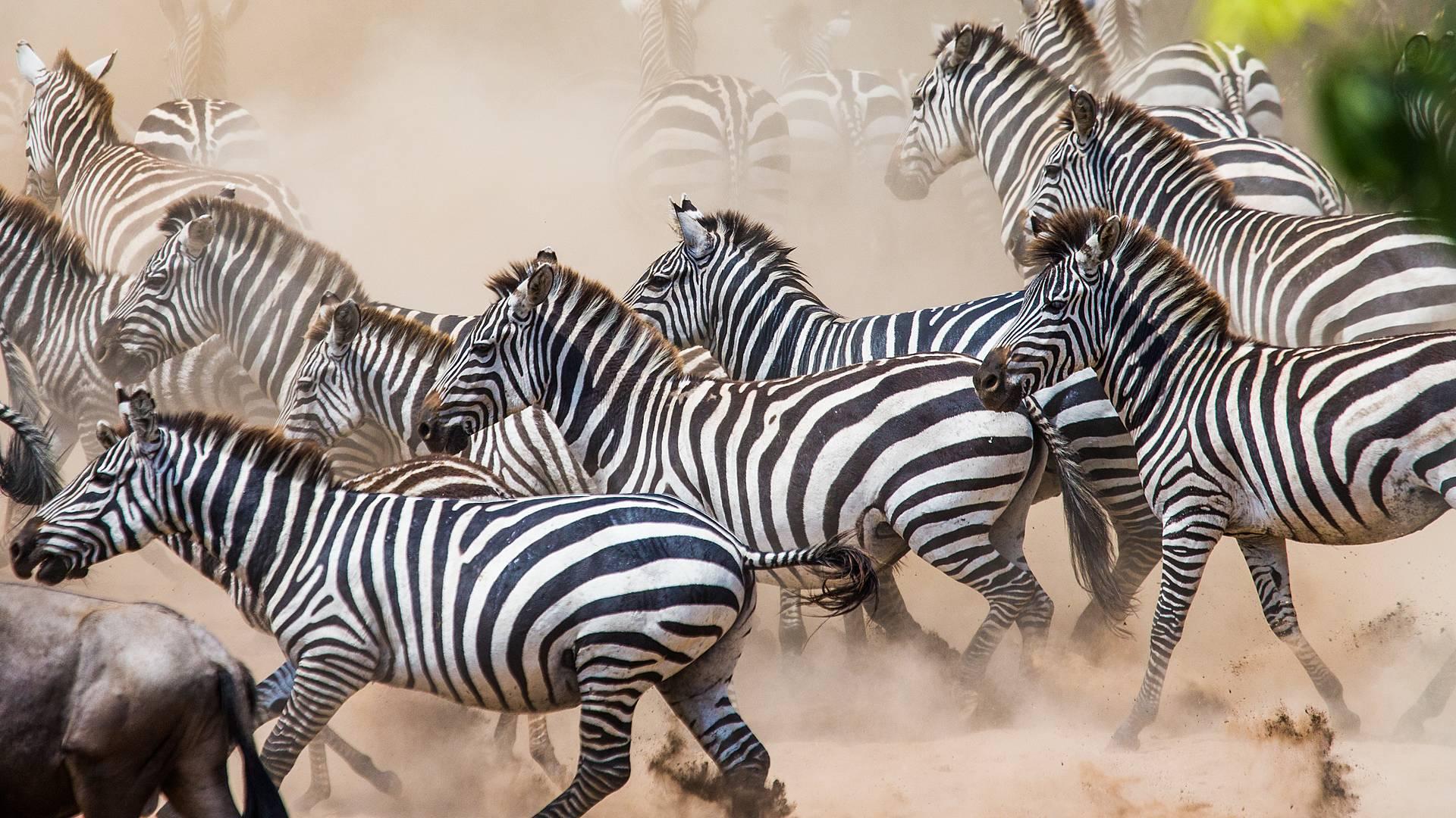 Ongekend wildlife in Oeganda en Tanzania