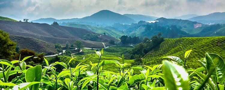 Die liebliche Westhalbinsel und Singapur