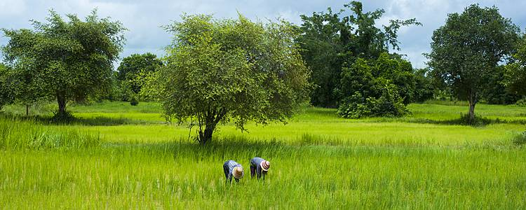 Jungletrek in Pailin en ontspannen op het eiland van Koh Thmei