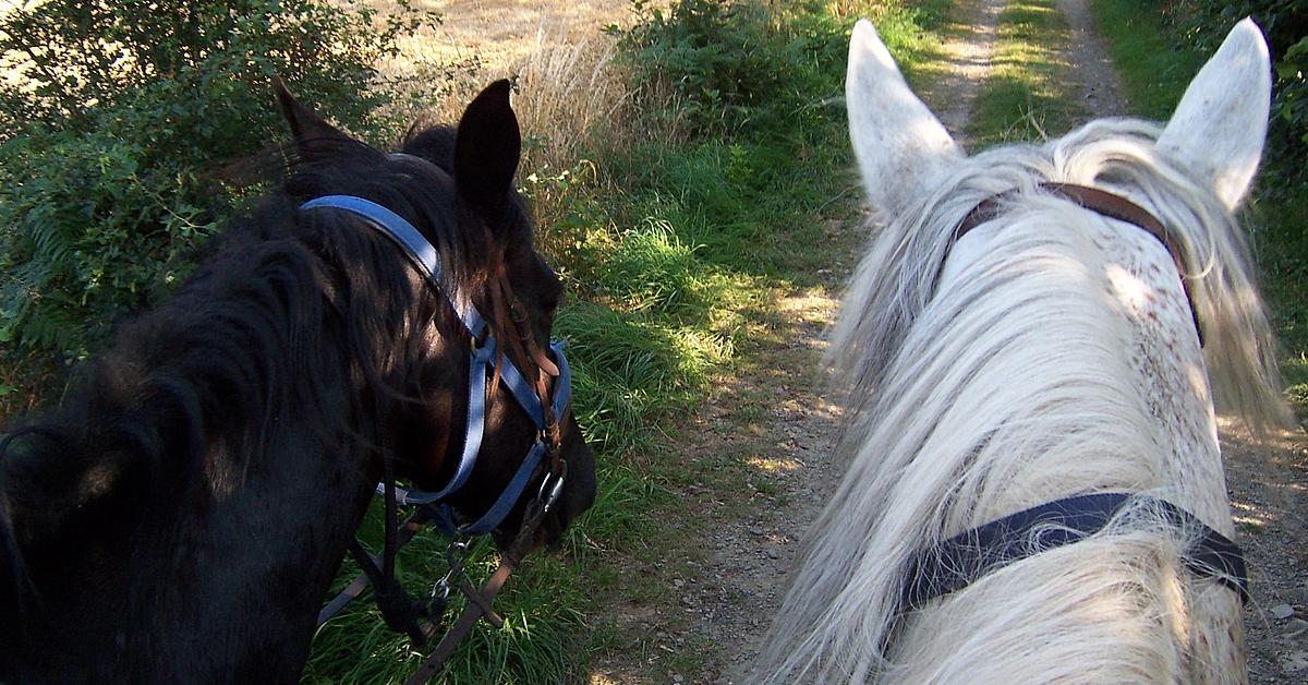 Voyage avec des animaux : Randonnée équestre en Transylvanie